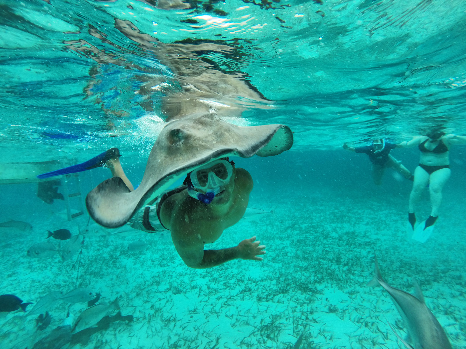 Wearing a Sting Ray on Your Head Like a Hat - Belize, Belize