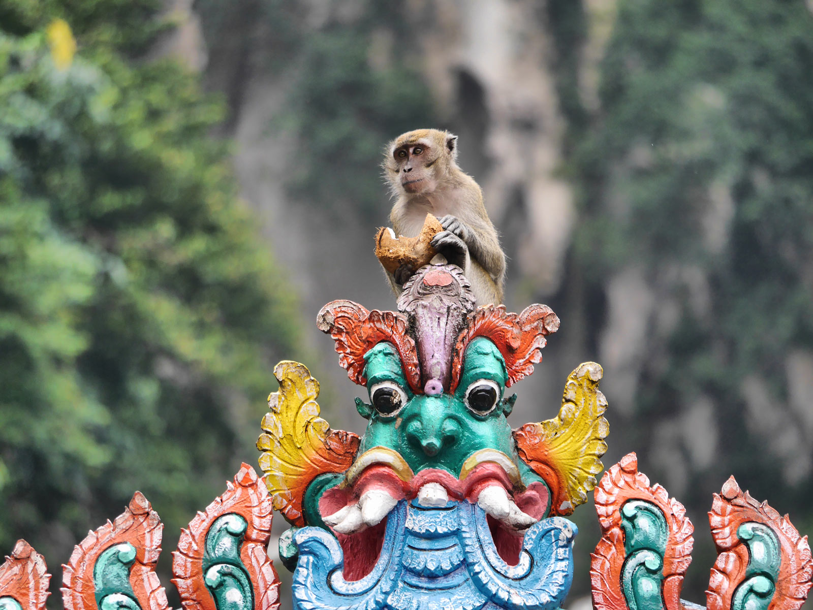 Monkey Eating Coconut on top of the Gate at Batu Caves Temple