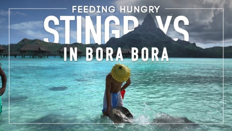 Play Video: Bora Bora - Stingray Feeding on the Beach